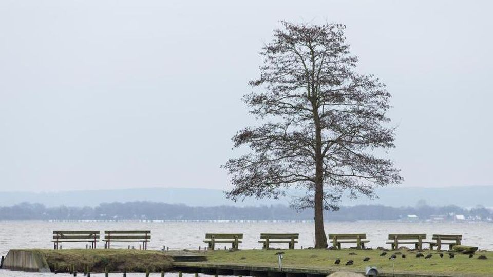 Ein Baum und Sitzbänke stehen am Ufer des Dümmers. Foto: Friso Gentsch/dpa/Archivbild