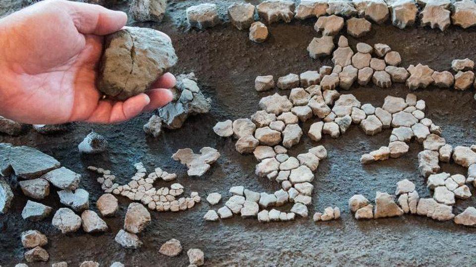 Überreste einer rund elf Millionen Jahre alten Lederschildkröte. Foto: Daniel Bockwoldt/dpa