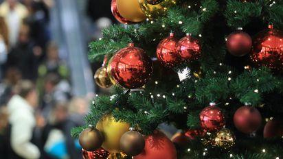 Baumarkt Tannenbaum.Oh Tannenbaum Oh Tannenbaum Darauf Sollten Sie Beim Weihnachtsbaum