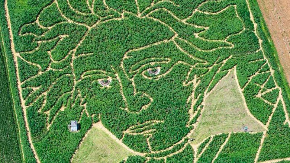 Beethoven als Labyrinth im Maisfeld. Foto: Peter Kneffel/dpa/Archivbild
