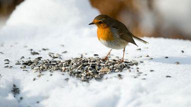 Darf Man Alle Wildtiere Im Winter Futtern Nein Fur Einige Kann Das