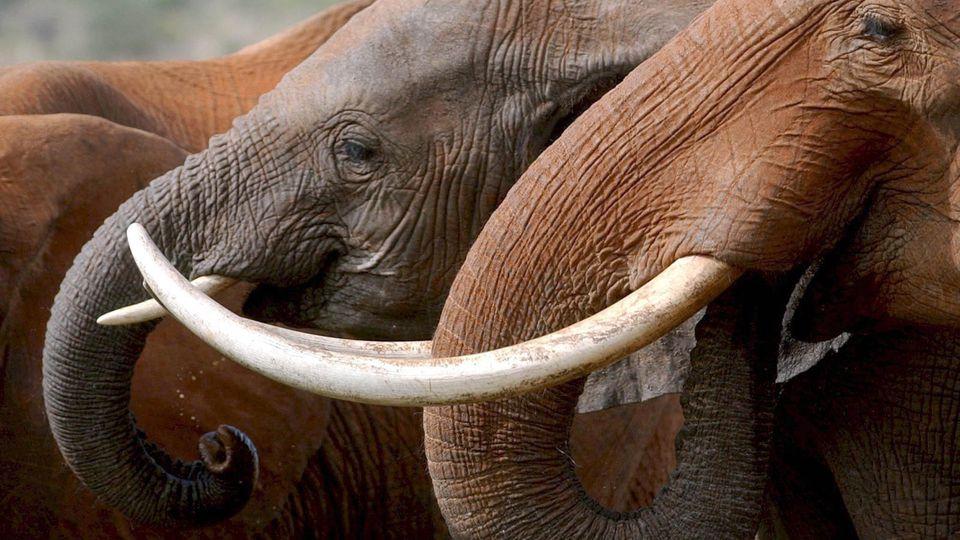 Elefanten an einem Wasserloch im Tsavo-Nationalpark in Kenia