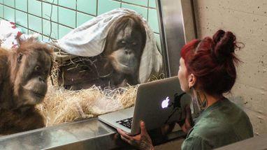 Zoo Dating online