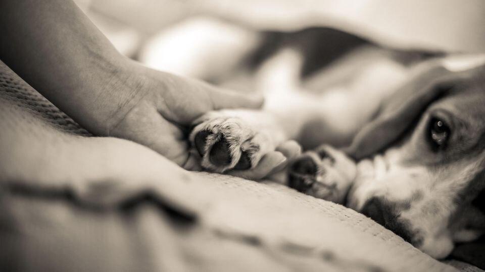 Was fühlen Tiere, wenn sie eingeschläfert werden?