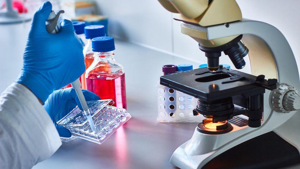 Stammzelltherapie wird bei einigen Krankheiten eingesetzt