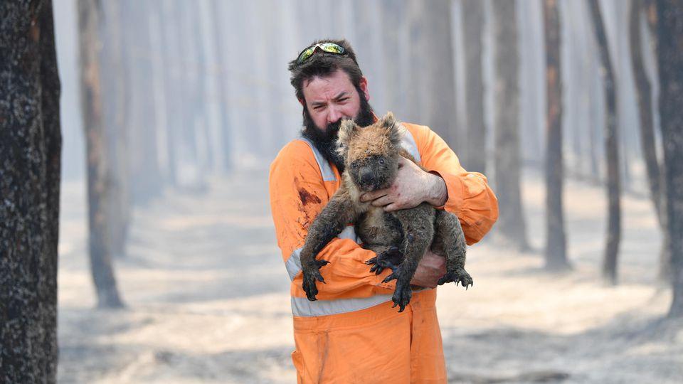 Buschbrände in Australien: Vor allem die Tierwelt und die Flora leiden massiv unter den verheerenden Feuern.