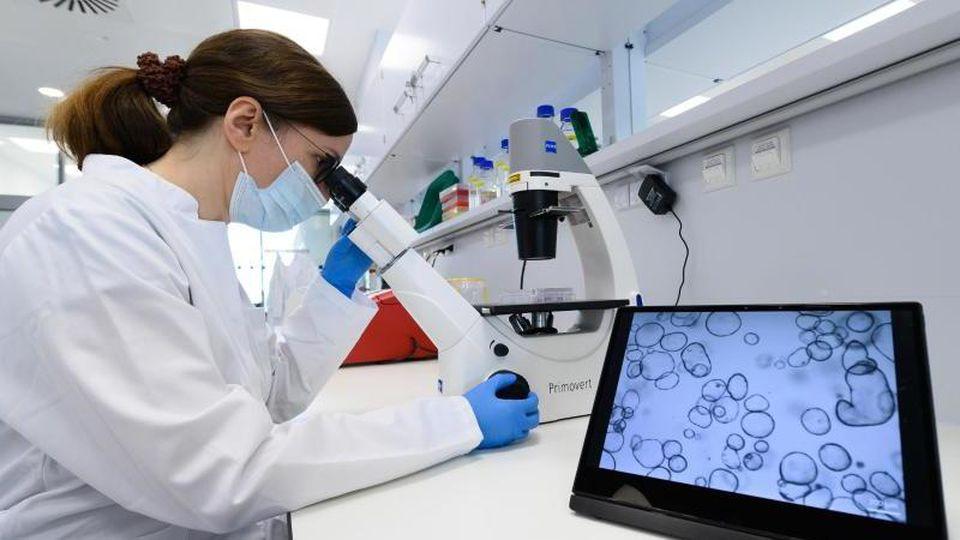 Claudia Ball, wissenschaftliche Laborleiterin, sitzt im Rahmen eines Presserundgangs in einem Labor im Neubau des Nationalen Centrums für Tumorerkrankungen Dresden (NCT/UCC) an einem Mikroskop. Foto: Sebastian Kahnert/dpa-Zentralbild/dpa