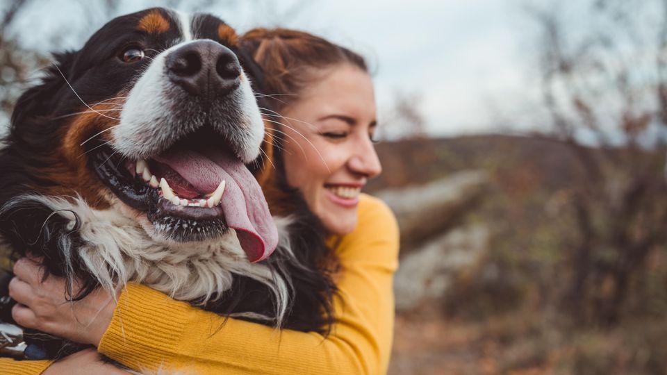 Es gibt einige Dinge, die wir tun, was unsere Hunde aber gar nicht verstehen.