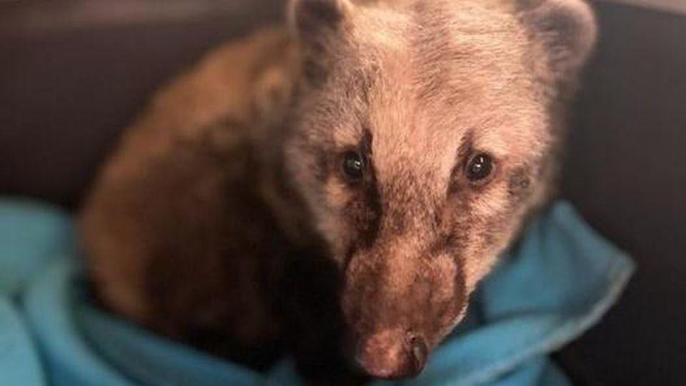Dieser Nasenbär wurde misshandelt und von der Wildtierhilfe Isernhagen ausgepäppelt. Jetzt wurde er aus seinem Gehege gestohlen.