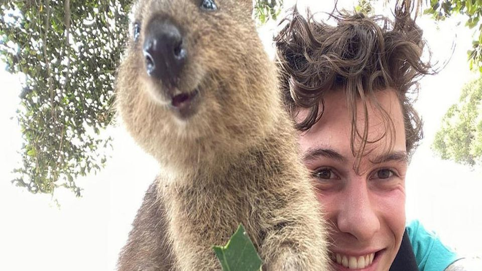 Shawn Mendes scheint einen neuen besten Freund zu haben