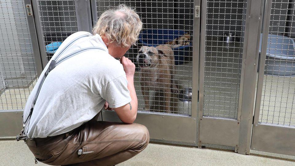 Chico im Tierheim Hannover vor dem Wesenstest