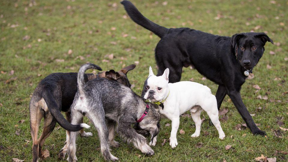 Der durchschnittliche Haushund verursacht laut einer Studie während seiner Lebenszeit circa 8,2 Tonnen CO2. (Symbolfoto)