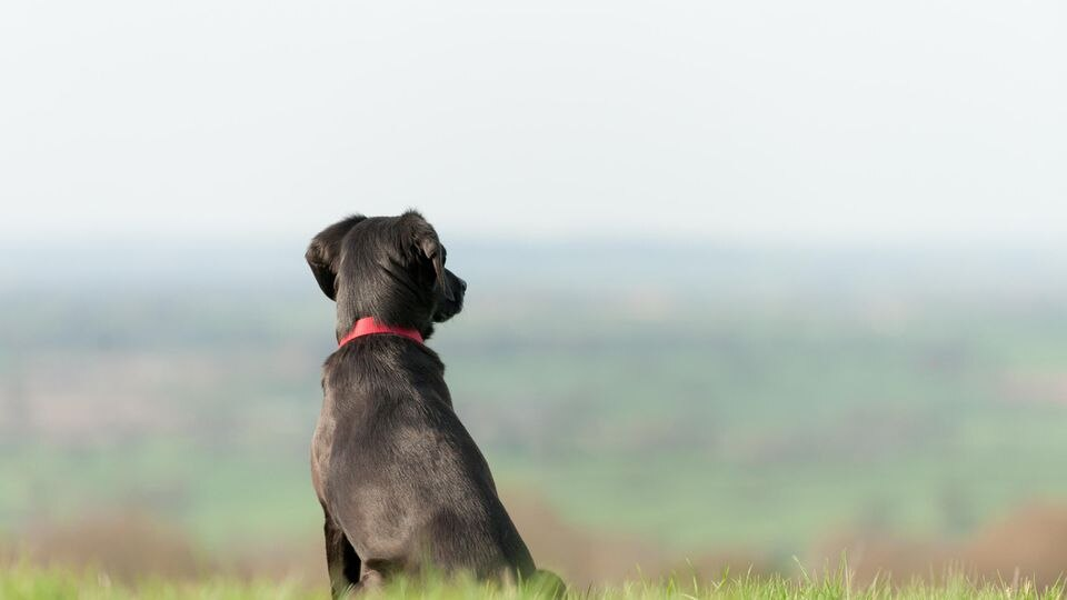 Symbolbild Hund