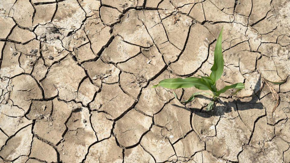 Mitteleuropa und Deutschland haben eine solche Dürrezeit seit rund 250 Jahren nicht erlebt