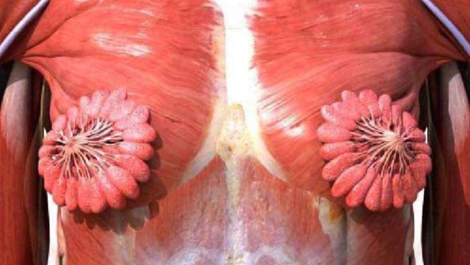 Die weibliche Brust ähnelt einer Blume.