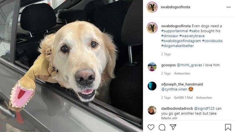 Tiffany White arbeitet in Corona-Drive-Through-Teststationen in Melbourne und hatte die Idee für den Hunde-Account.