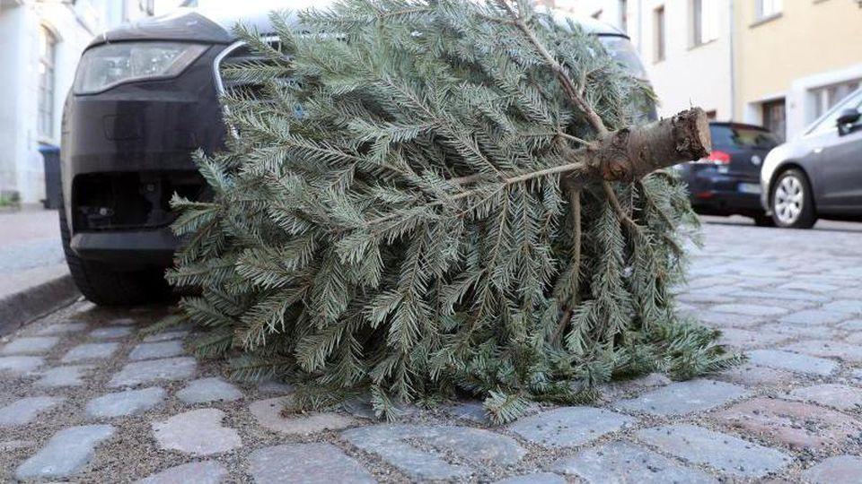 Ein Weihnachtsbaum liegt auf der Straße. Foto: Bernd Wüstneck/dpa/Archivbild