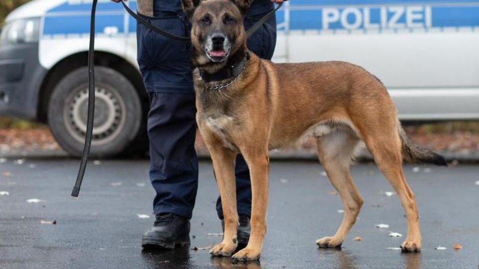 EIn Polizist steht neben einem Polizeihund. Foto: --/Polizeidirektion Göttingen/dpa/Symbolbild