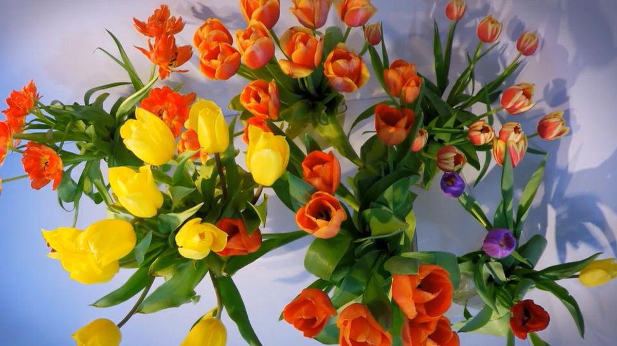 Schnittblumen So Bleiben Tulpen Und Rosen Länger Frisch