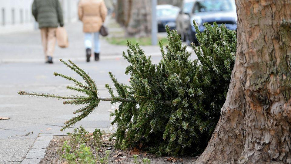 03.01.2019, Berlin: Ein Weihnachtsbaum liegt am Straßenrand. Ab dem 7.1. will die Berliner Stadtreinigung (BSR) die Weihnachstbäume einsammeln. Foto: Britta Pedersen/dpa +++ dpa-Bildfunk +++