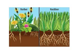 Die Ergiebigkeit beim Test und Vergleich des Rasendüngers