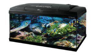 Häufige amazon Kundenrezensionen über die Produkte aus einem Aquarium Test und Vergleich