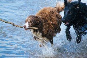 Die Anbieter aus einem Hundekrankenversicherung Test und Vergleich