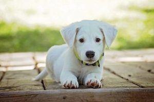Welche Arten der Hundekrankenversicherung aus einem Test und Vergleich gibt es