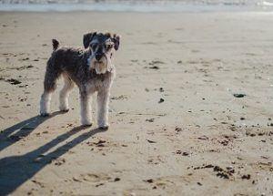 Die Ergebnisse aus einem Hundekrankenversicherung Test und Vergleich