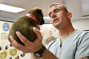 Selbstbeteiligung aus einem Hundekrankenversicherung Test und Vergleich