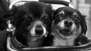 Welche Leistungen enthält eine Hundekrankenversicherung aus dem Test und Vergleich nicht?