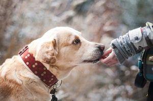 Wie funktioniert eine Hundekrankenversicherung aus dem Test und Vergleich