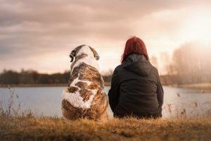 Der Abschluss einer Hundekrankenversicherung aus dem Test und Vergleich