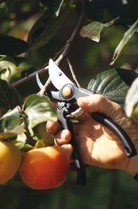Die Handheckenschere Gartenschere im Testvergleich