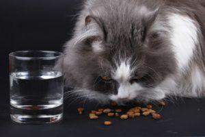 Die Prüfergebnisse von Stiftung Warentest zum Thema Katzenfutter