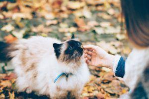 Alle Fakten aus einem Katzenfutter Test und Vergleich