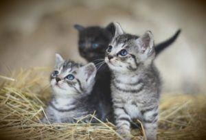 Der Komfort vom Katzenfutter Testsieger im Test und Vergleich