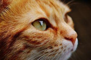Häufige amazon Kundenrezensionen über die Produkte aus einem Katzenfutter Test und Vergleich