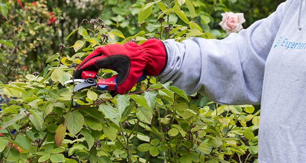 Spear & Jackson Razorsharp Bypass-Gartenschere im Test - obere Klinge aus SK5-Kohlenstoffstahl für dauerhafte Schärfe
