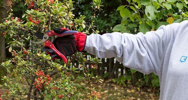 Spear & Jackson Razorsharp Bypass-Gartenschere im Test - für Rostbeständigkeit PTFE-beschichtet