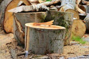 Gutes Angebot für Baum fällen