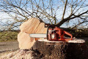 Günstiger Handwerker für Baum fällen