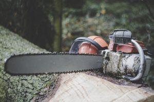 Vergleich: Baum fällen Kosten