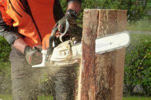Guter Kostenvoranschlag für Baum fällen