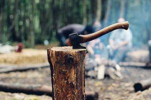 Vergleich: Baumschnitt Kosten