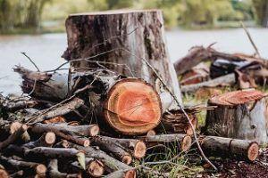 Der Preis für Baumschnitt im Vergleich