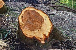 Gute Tipps für Baumschnitt im Vergleich